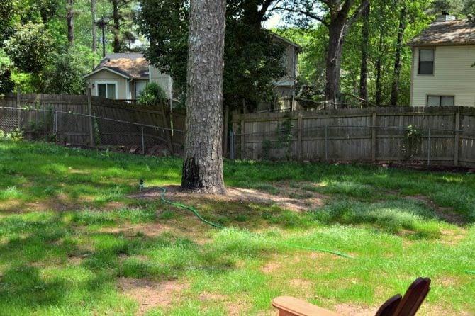 grass growing across the back yard