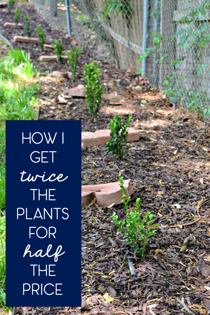 how i get twice the plants for half the price thanks to root growth hormone