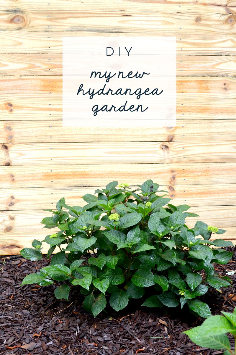 new hydrangea garden