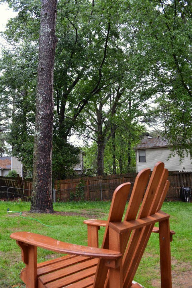 slow progress on the back yard