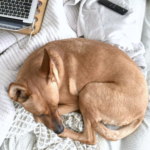 Things That Make a Busy Life with a Dog a LOT Easier (+ Giveaway)