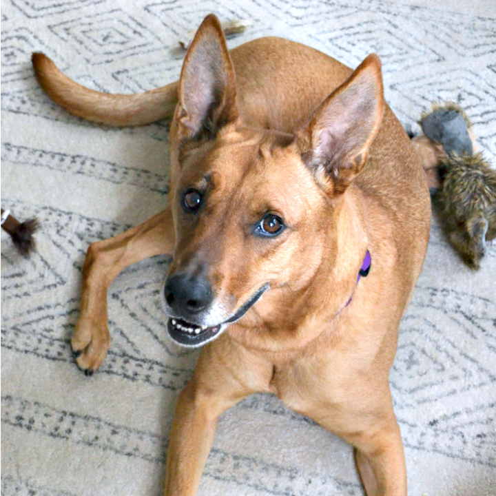 What To Remember When You Bring A Dog Home