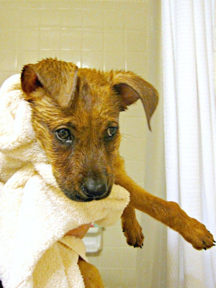 Charlie's first bath
