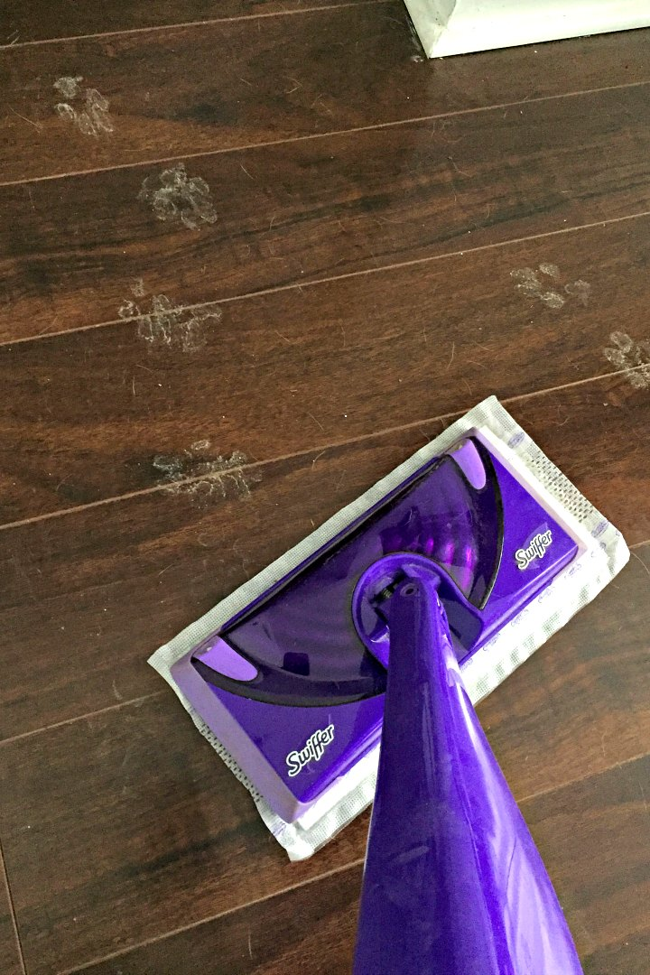 Cleaning muddy paw prints with Swiffer Wet Jet