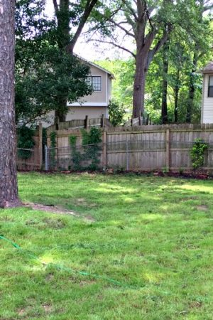 back yard with green grass