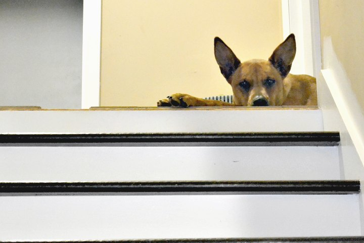 dog waiting on me at the top of the stairs