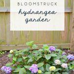 bloomstruck hydrangea garden 2017