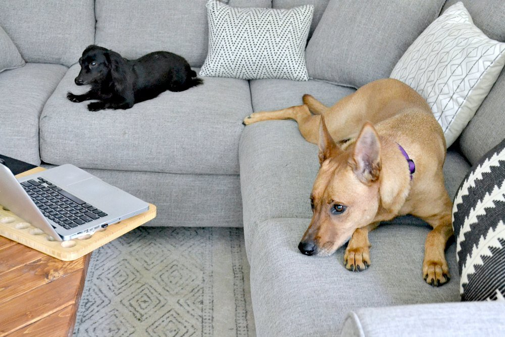 everyone is figuring out how to sit comfortably on the new couch