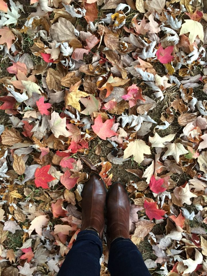 first day of fall - fallen leaves