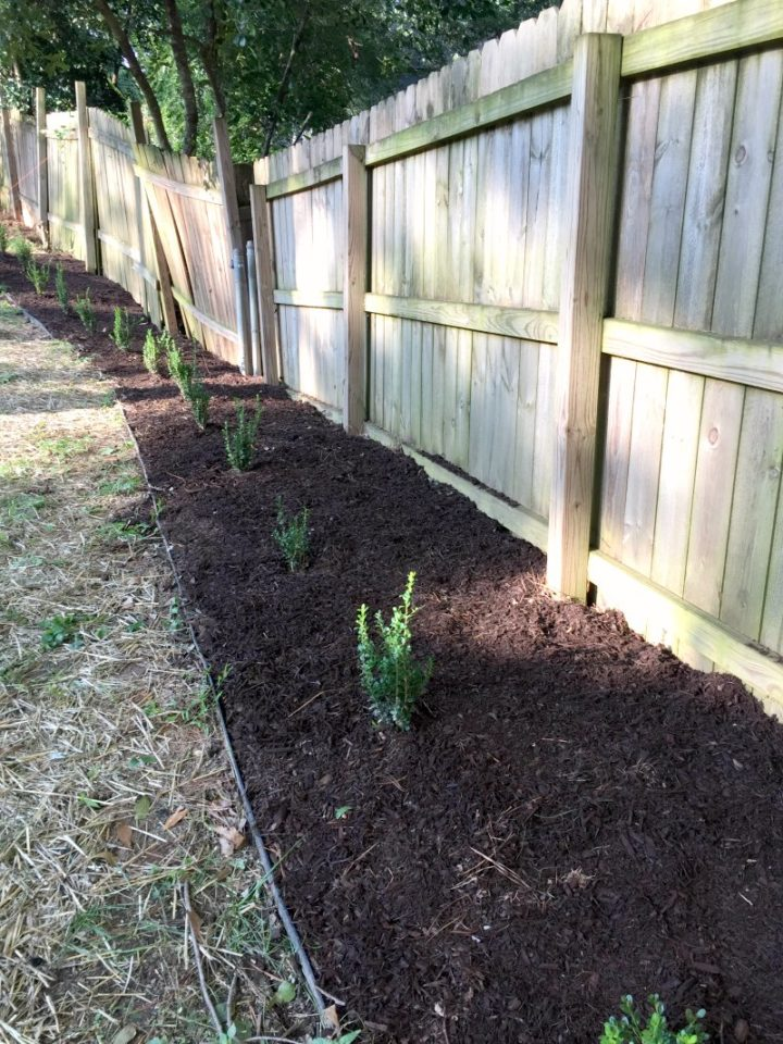 rear hedge line filled with new mulch