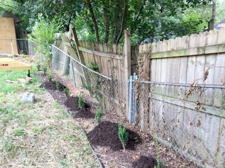 the rear fence line with brown mulch