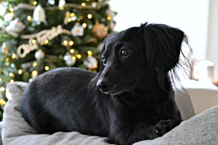 Stella at Christmas
