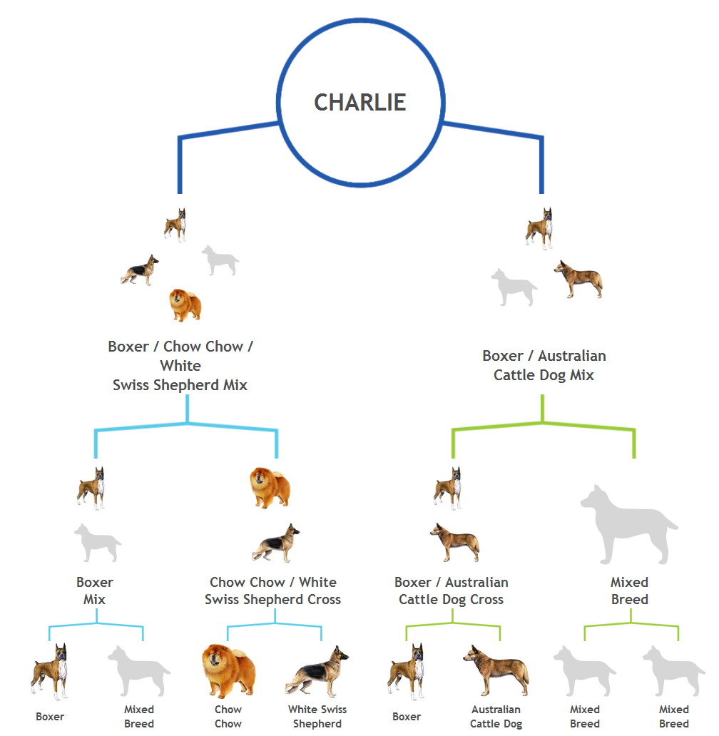 Charlie-ancestry-chart