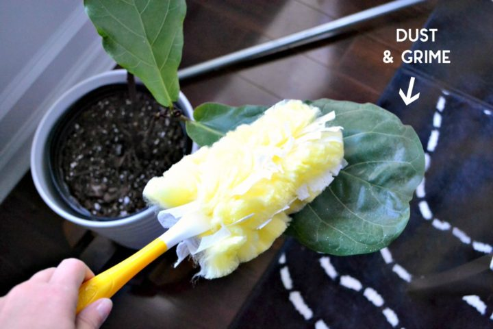 Swiffer helps clean off dust from indoor houseplants to keep them healthier