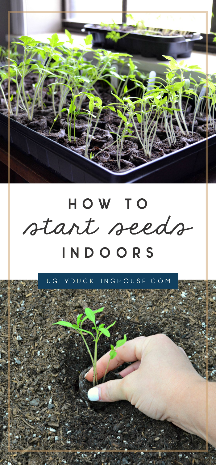 how to start seeds indoors - grow seedlings from greenhouse pellets