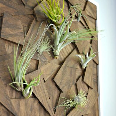 DIY Air Plant Wall Art from Scrap Wood
