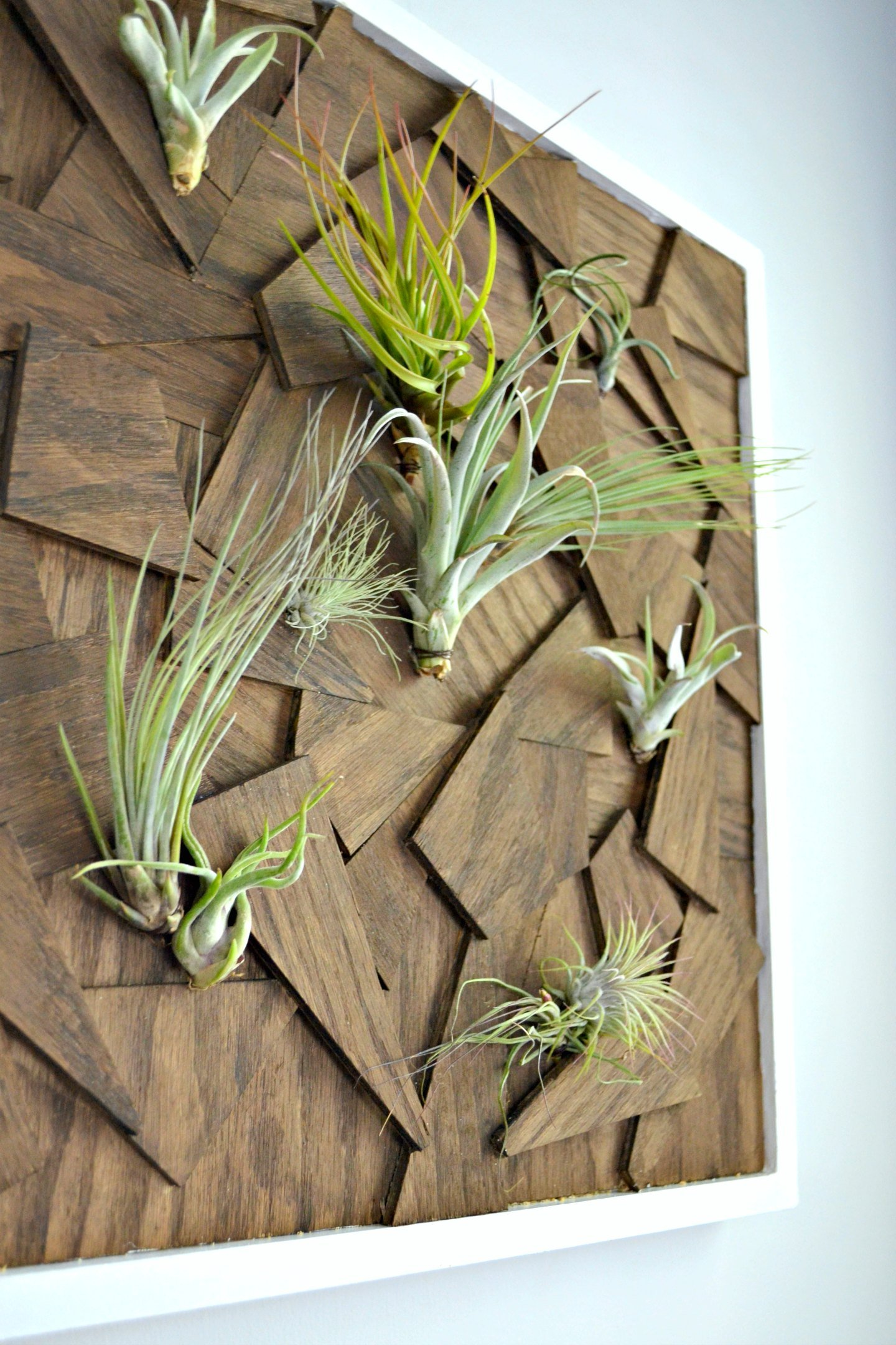 air plant wall art closeup