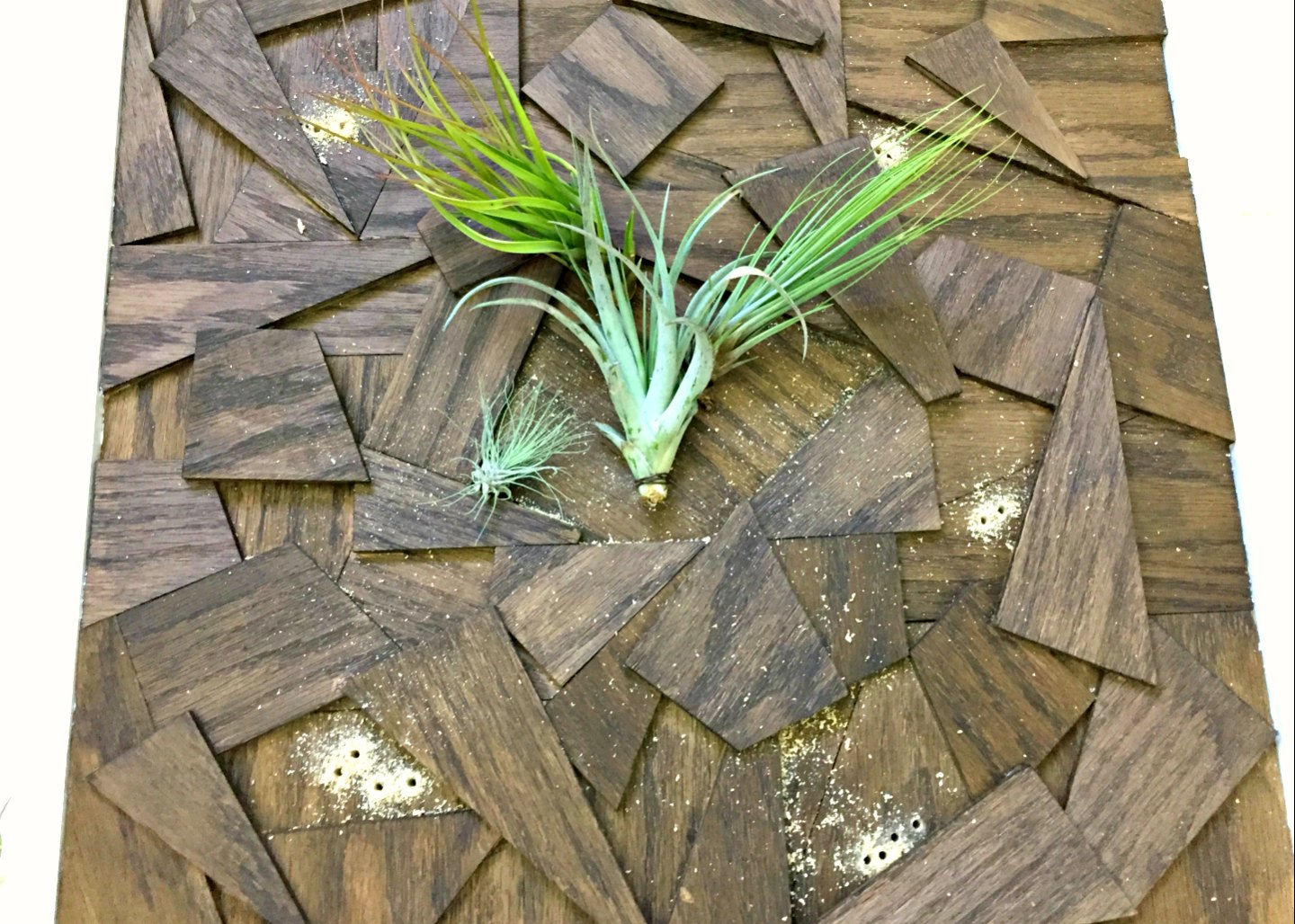 attaching air plants around center spot
