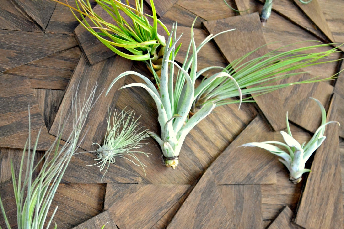 closeup diy air plant wall art