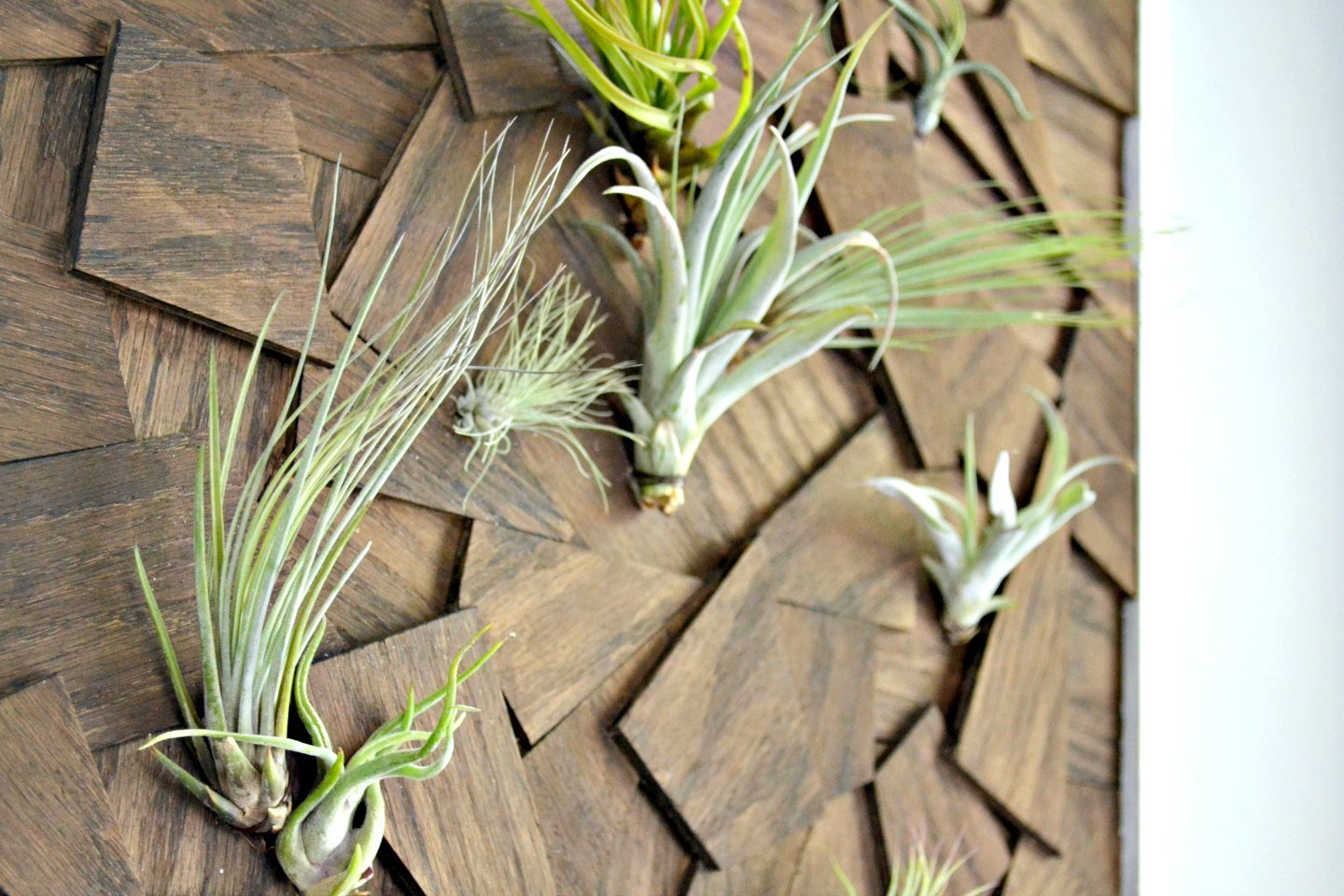 All the little air plants look wonderful in this easy DIY wall hanging made from scrap wood.