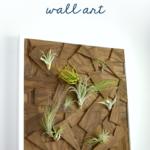 air plant wall art