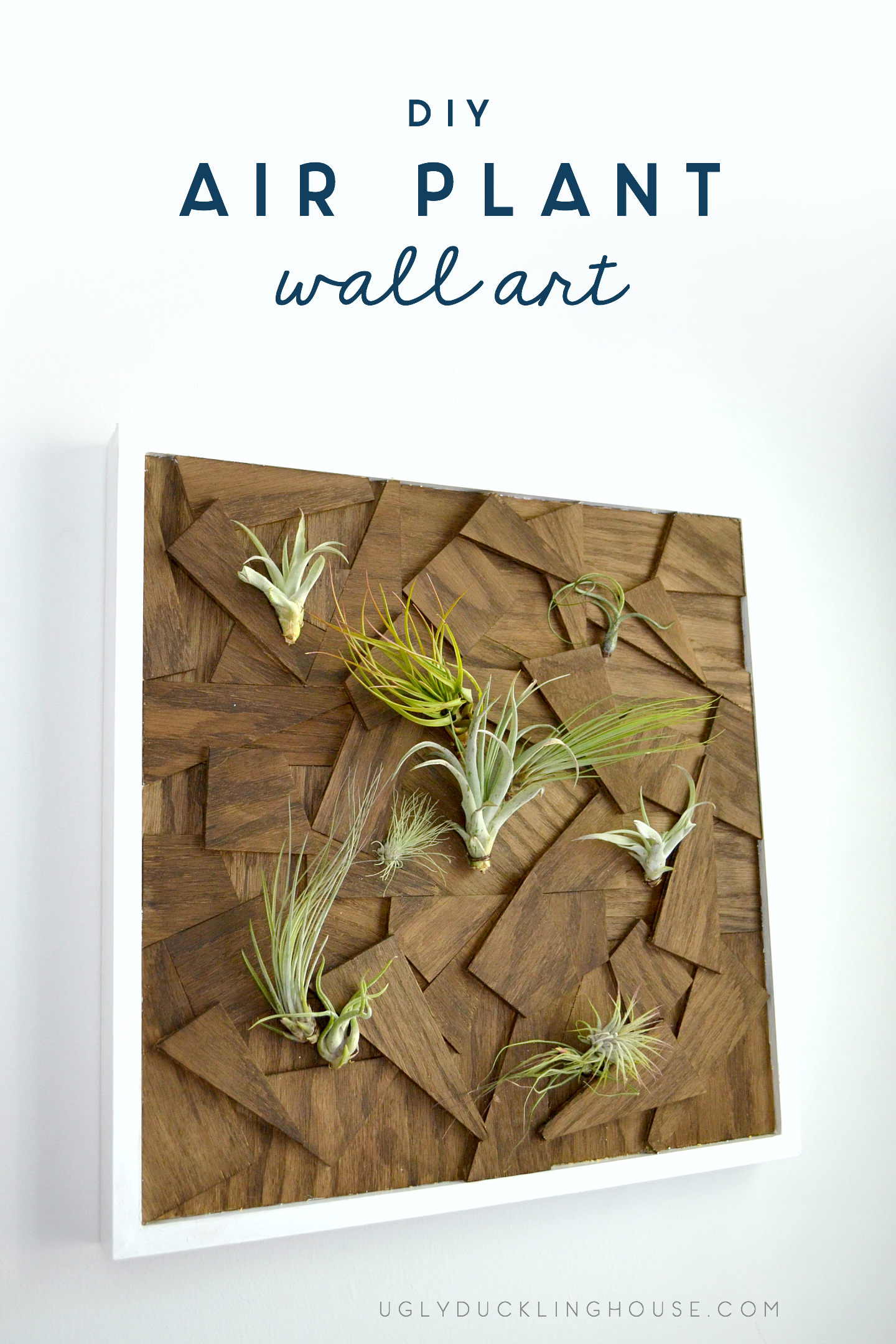This DIY air plant wall art is made from scrap wood and looks stunning in any room.