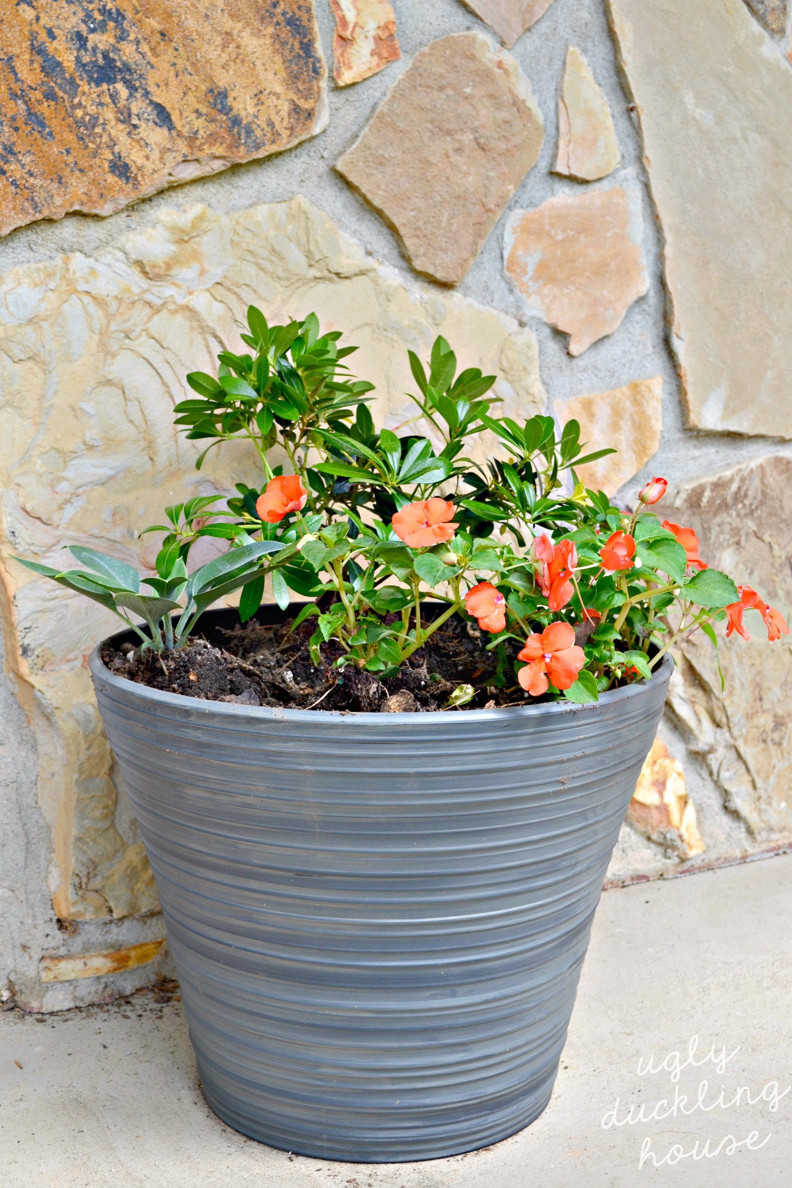6 Simple DIY Tricks for Covered Porch Plants