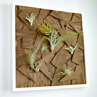 diy scrap plywood air plant wall art