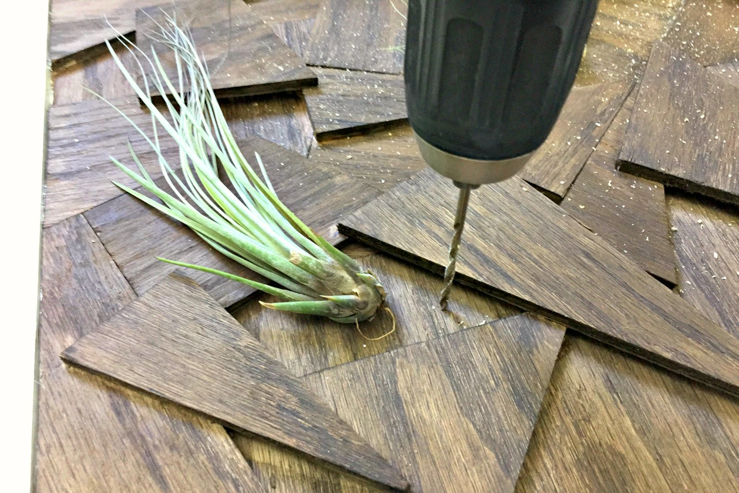 drill through art where you put air plants