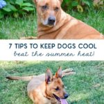 7 tips to keep dogs cool in the summer