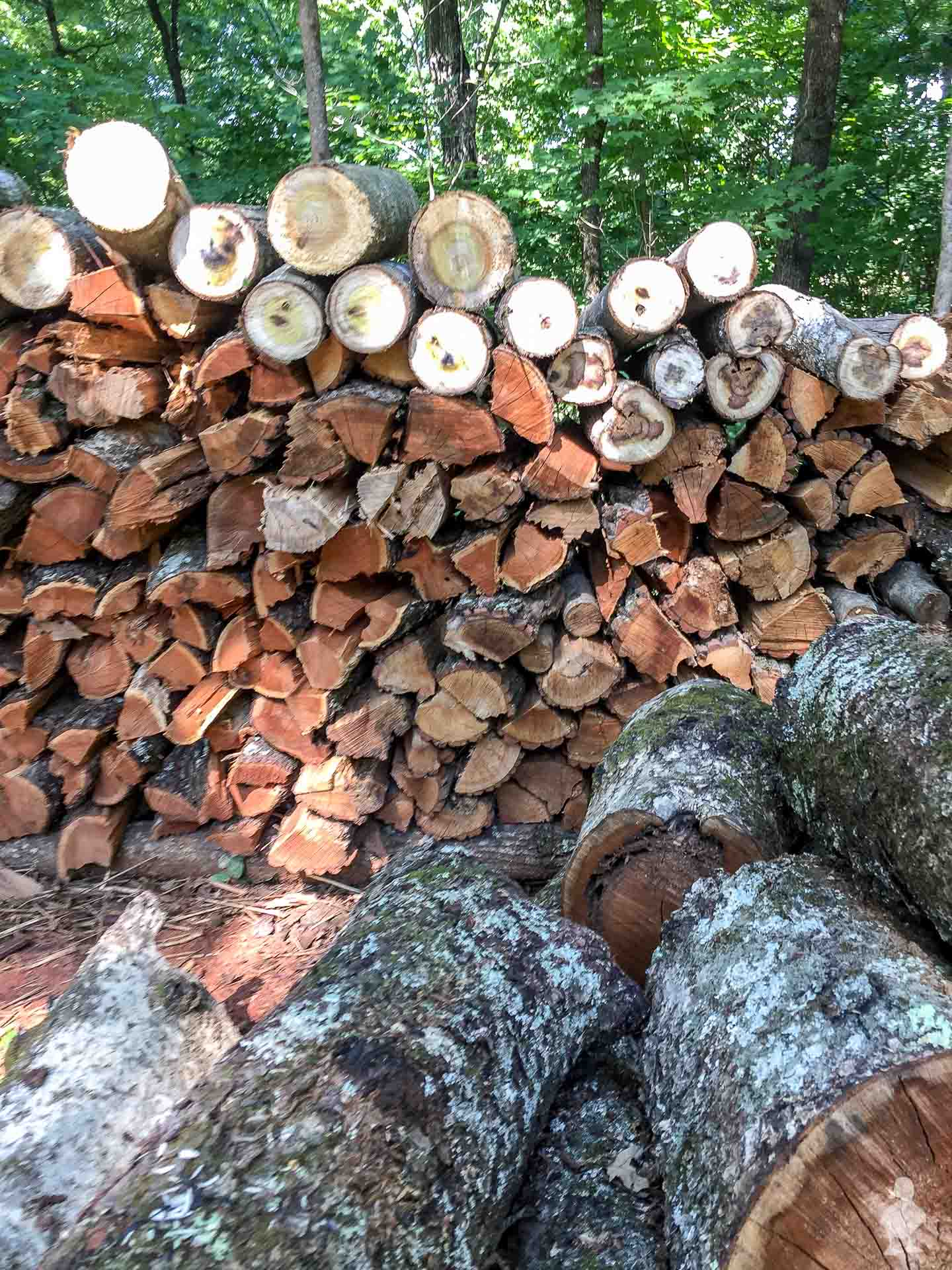 Giant woodpile in TN