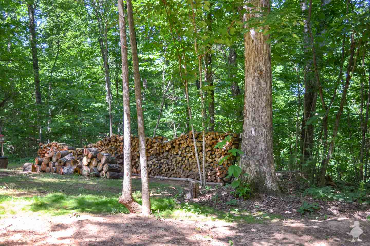 Large woodpile - Tennessee wooded area behind the Carter home