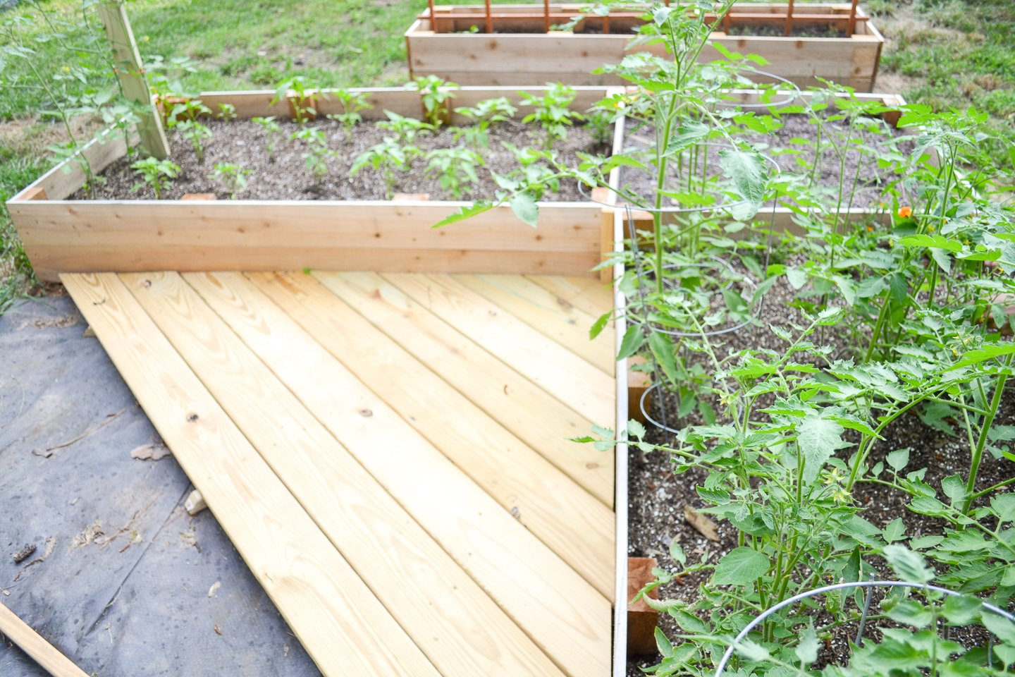 Small new garden deck - l-shaped raised garden bed