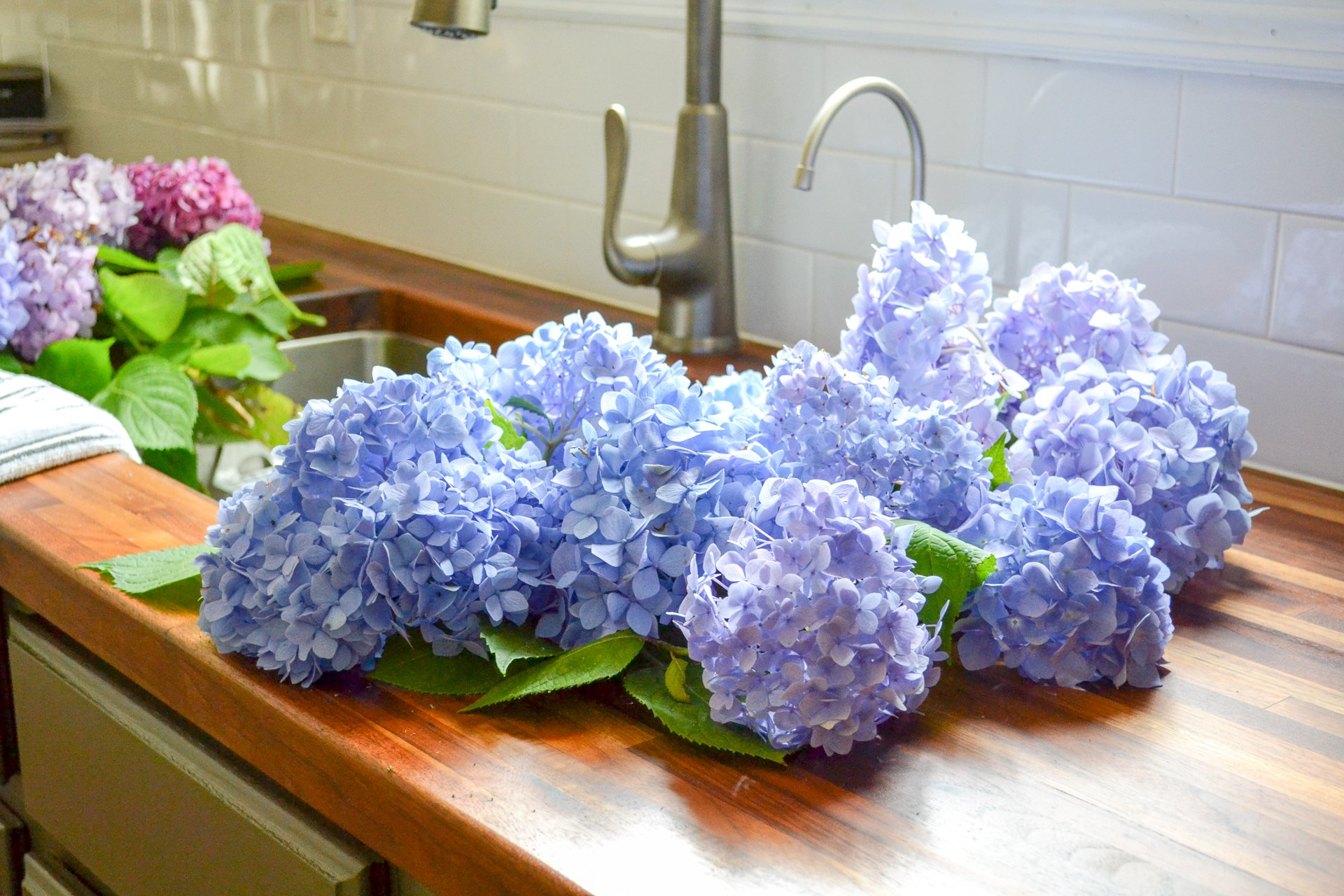 blue cluster of hydrangeas in sink