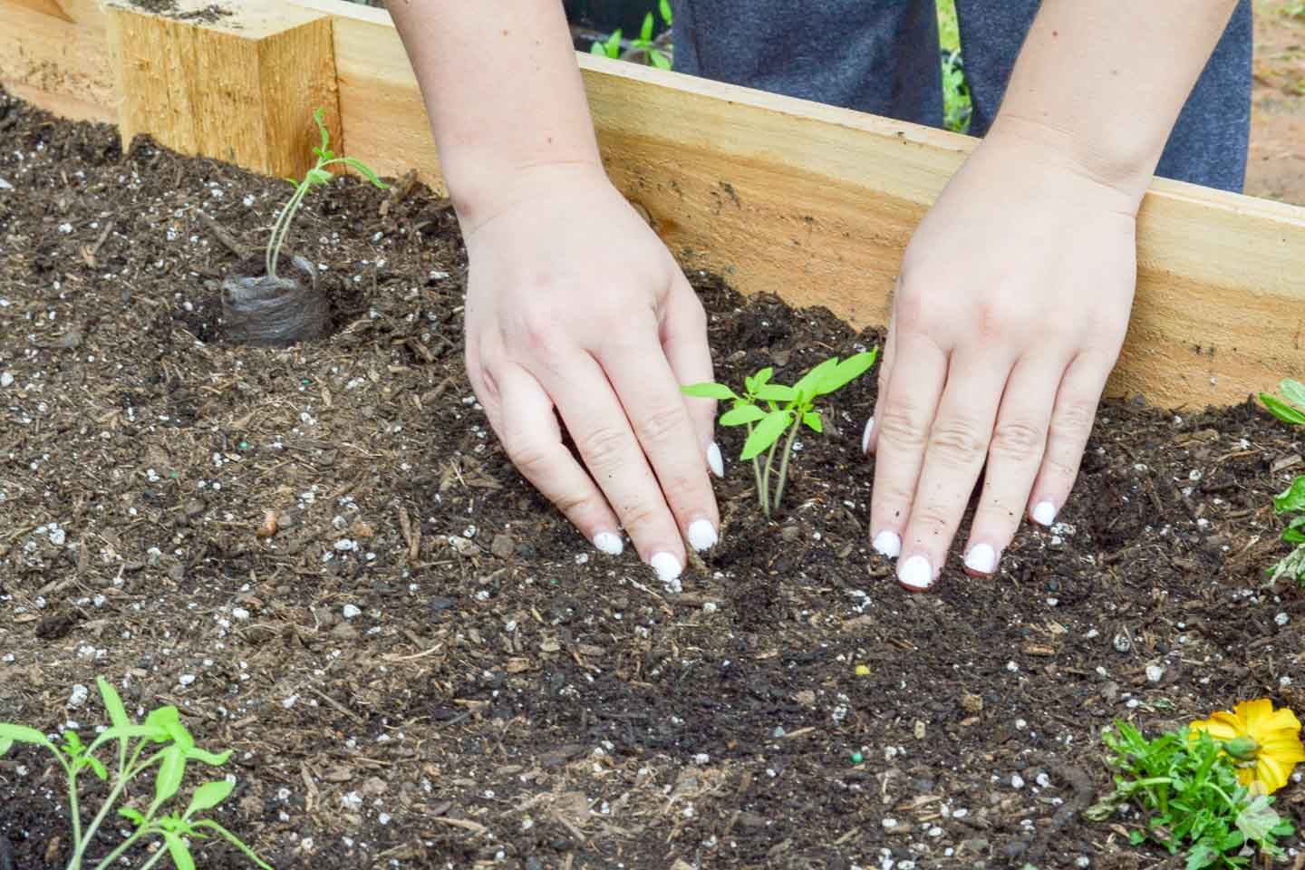 closeup of hands digging into garden soil