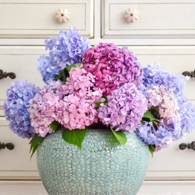Everything I Know About Hydrangeas
