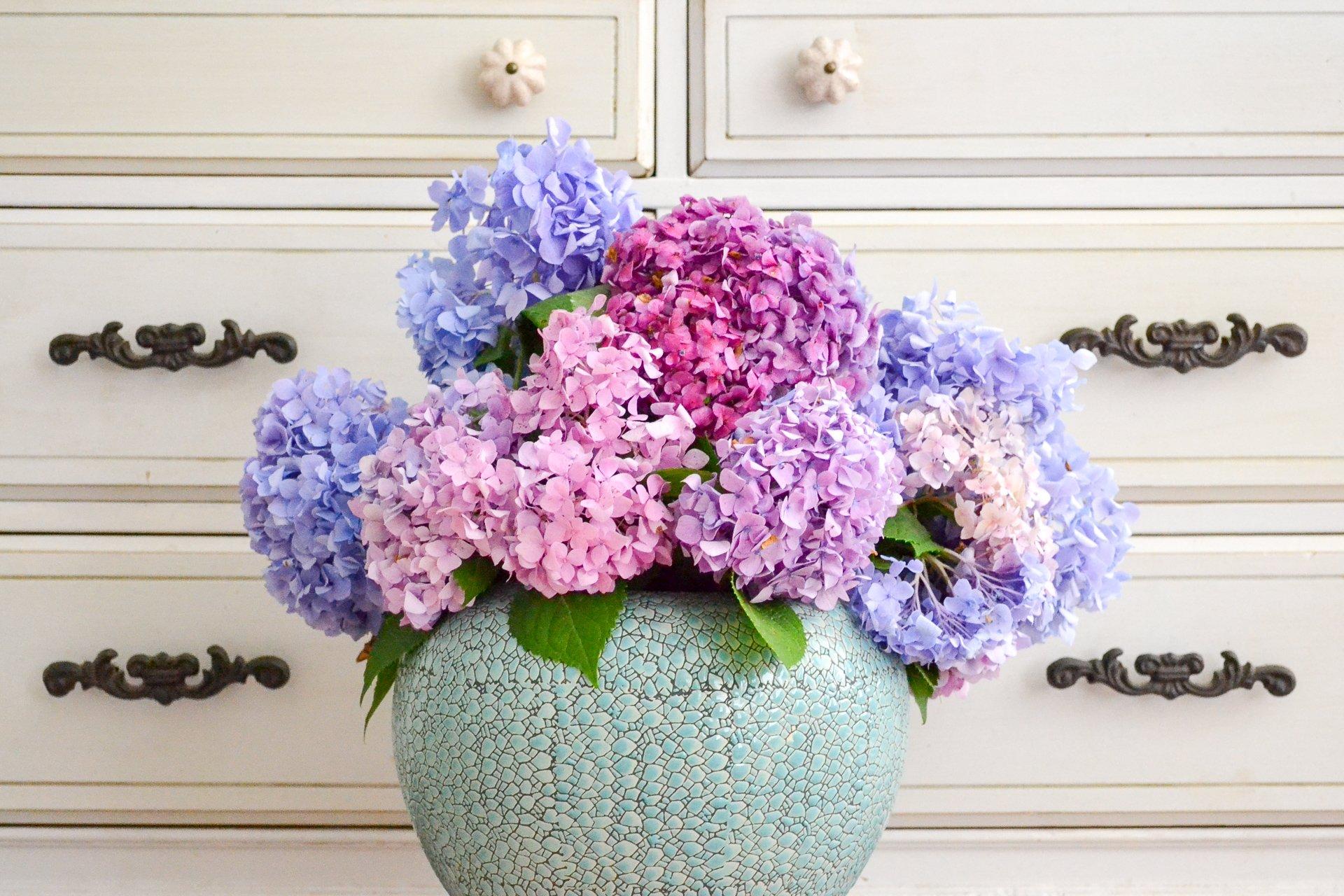 Hydrangea In Large Blue Vase