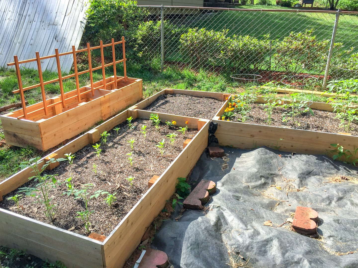 new vegetable garden bed area in back yard