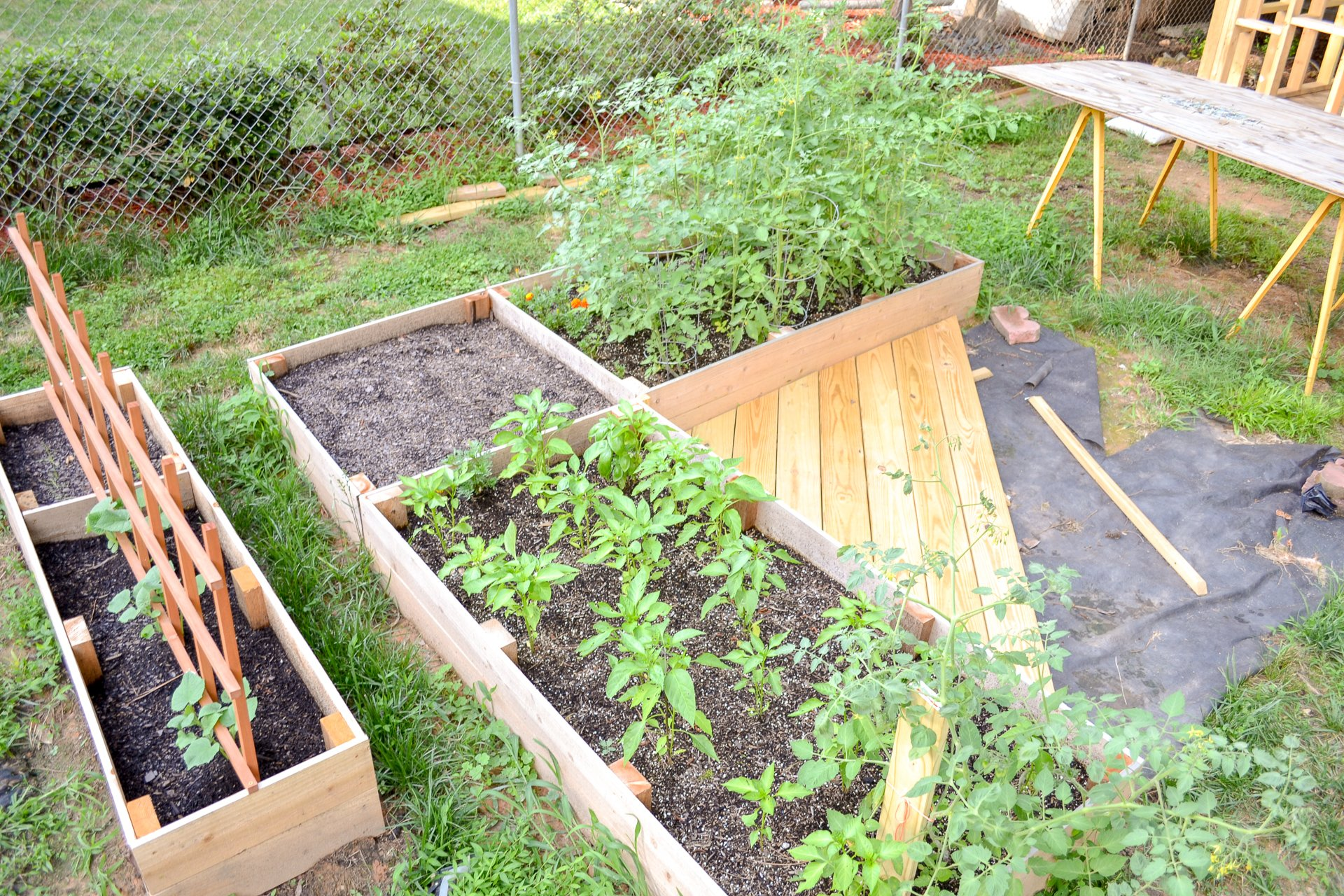 overall look of vegetable garden