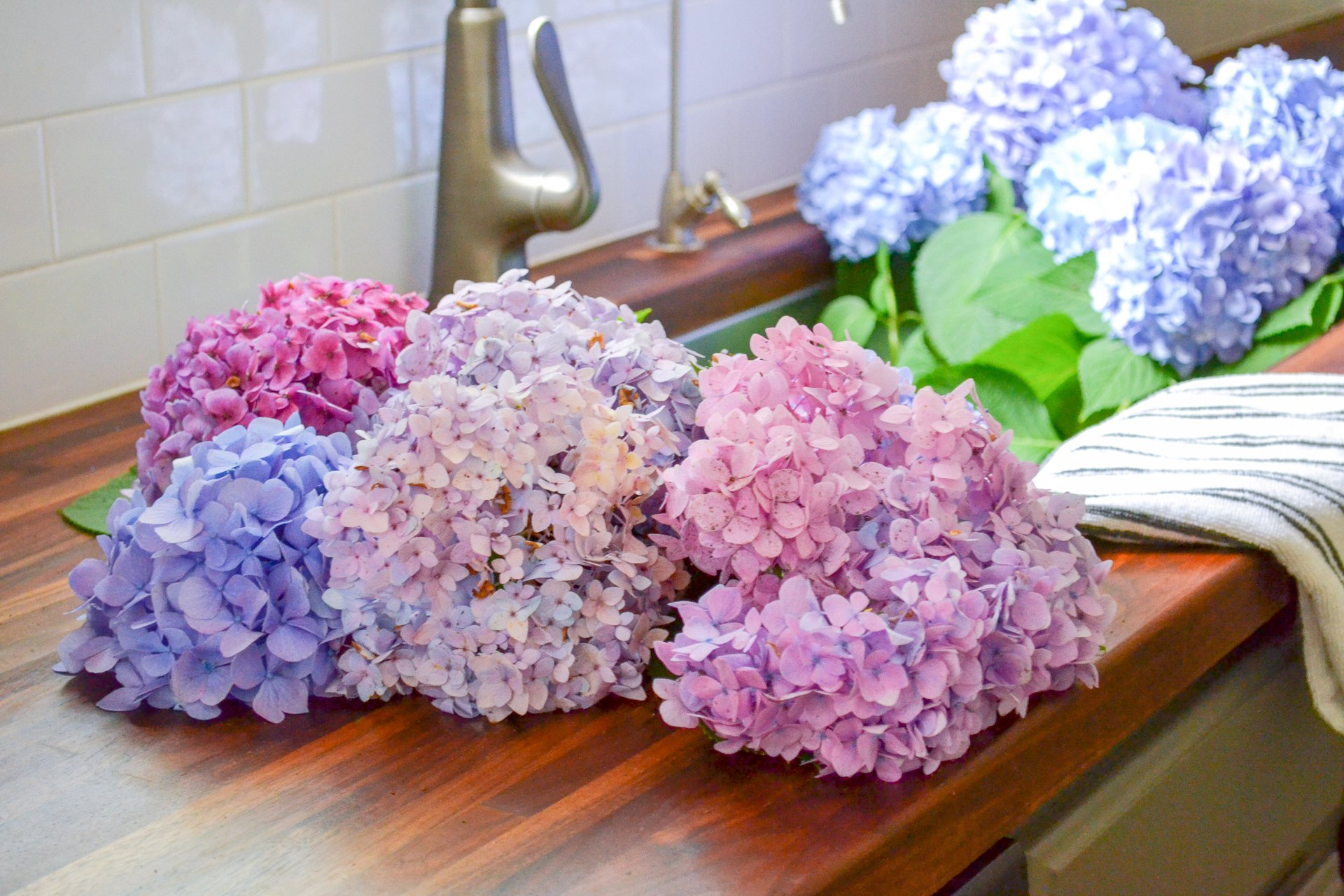 two bouquets of hydrangeas in sink