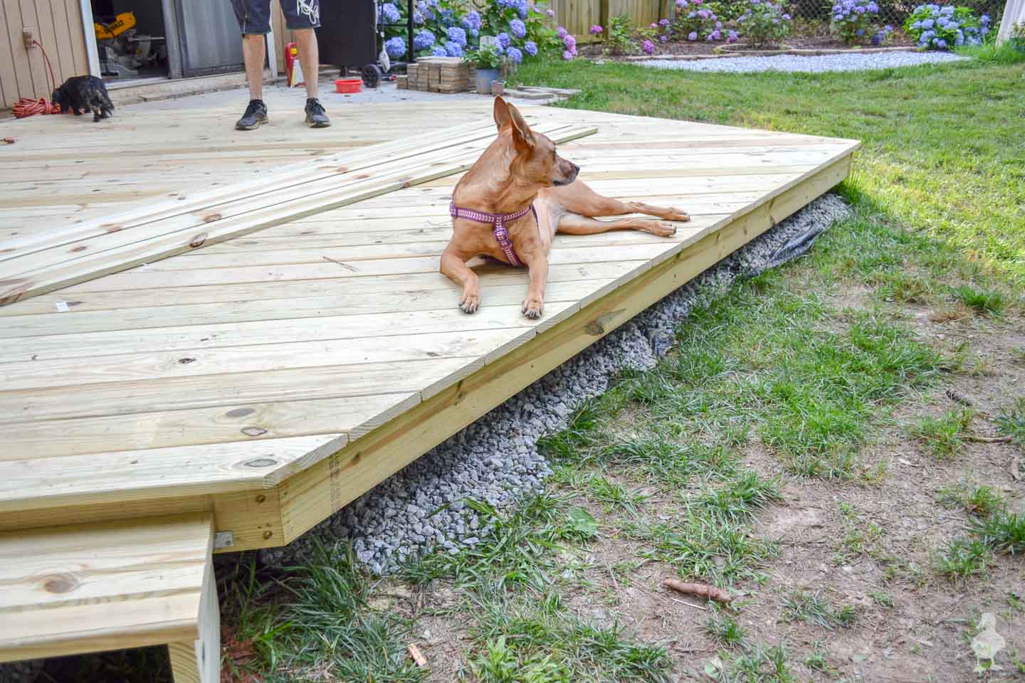 Charlie enjoying finished deck