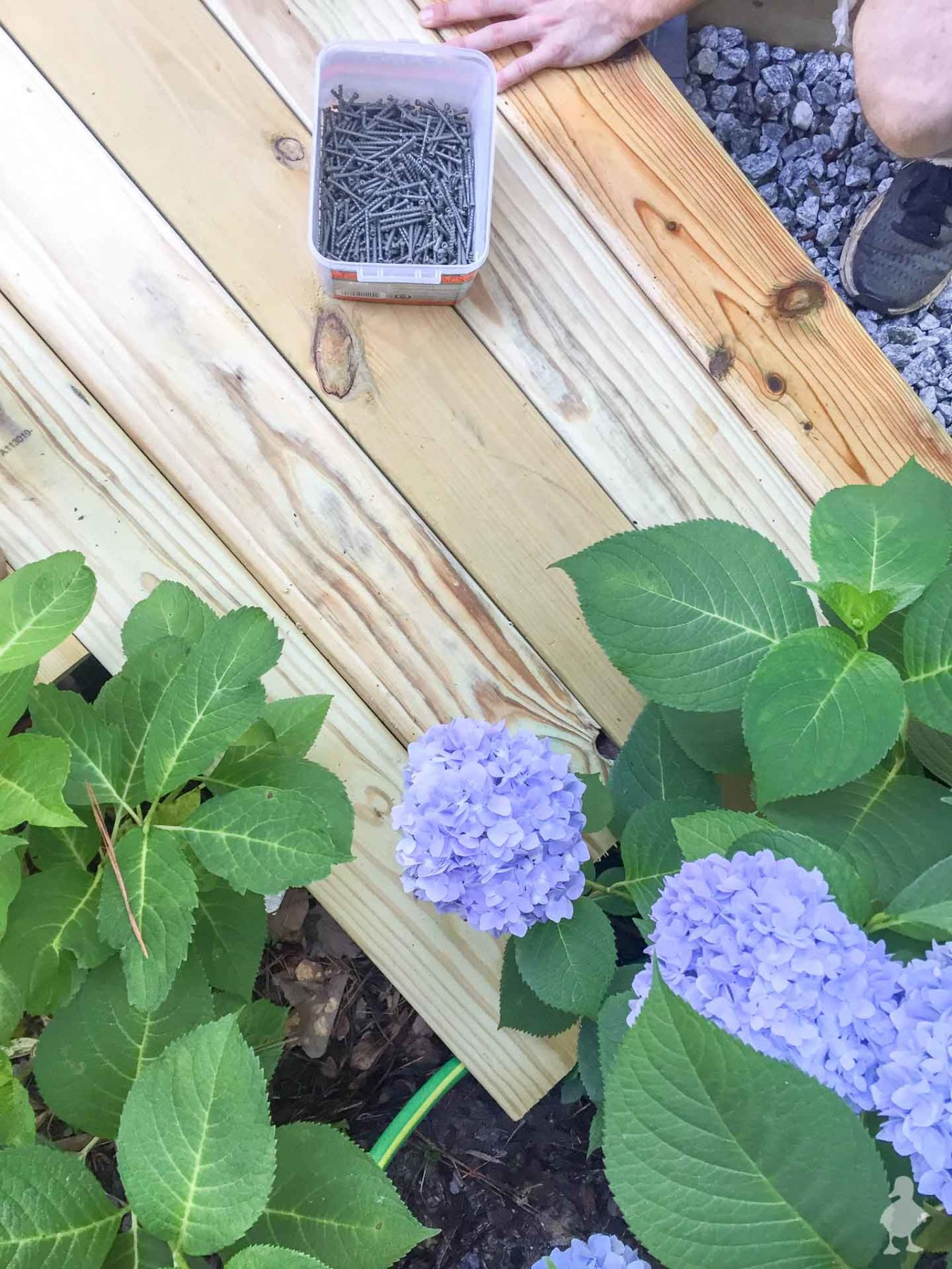hydrangeas interfering with deck install - diagonal decking