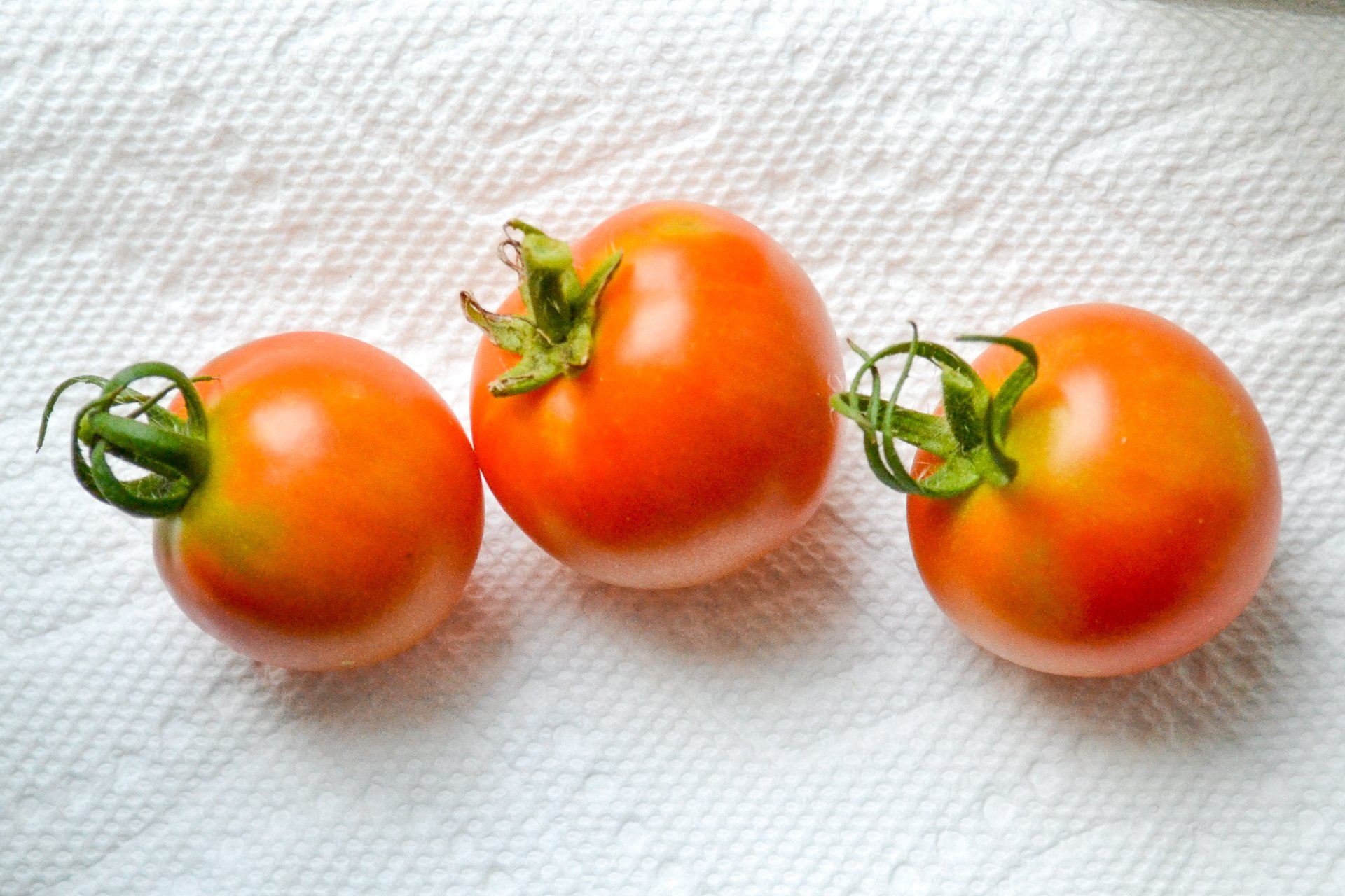 laying out tomatoes on windowsill to ripen
