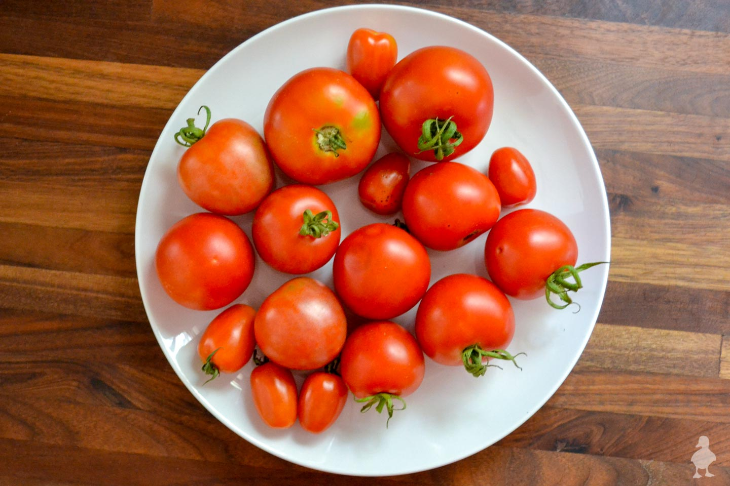 plate of freshly picked tomatoes