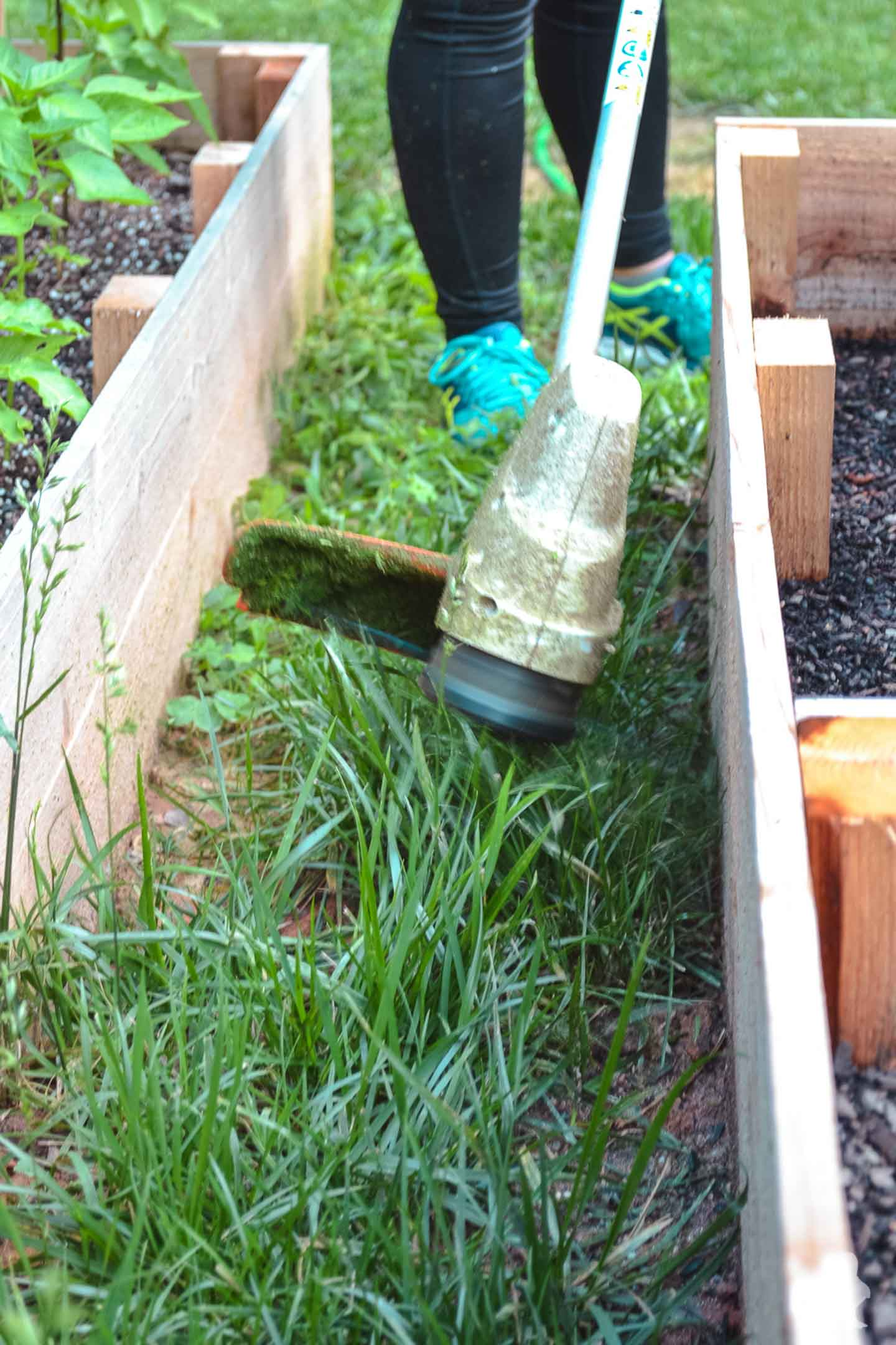 closeup using stihl trimmer around garden beds