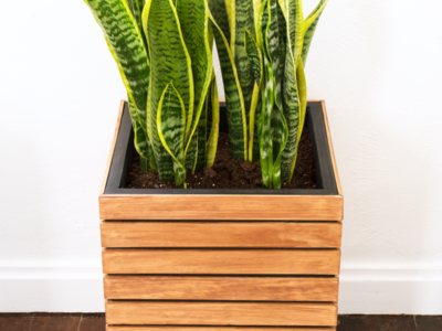 DIY slatted planter on wheels with snake plant