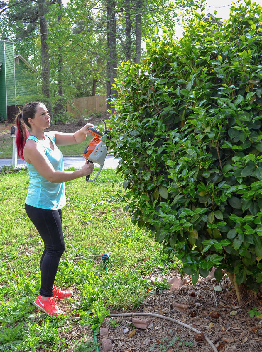 trimming camellia in front yard