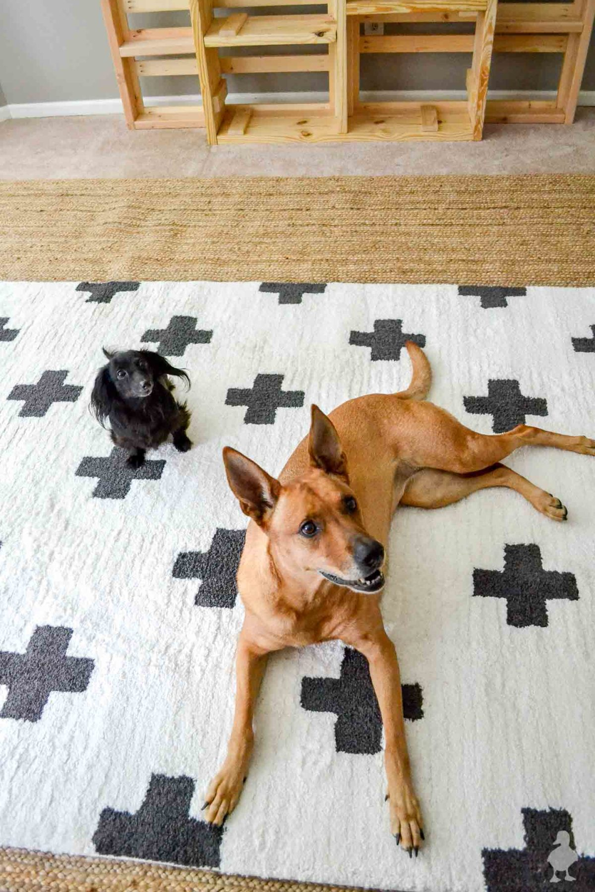Stella and Charlie - dogs laying on new rugs in master bedroom