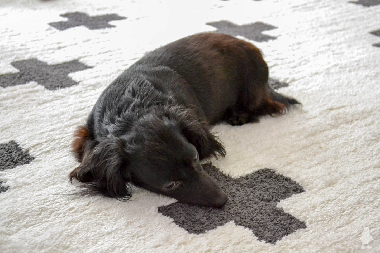 black dachshund on plus sign scandi rug