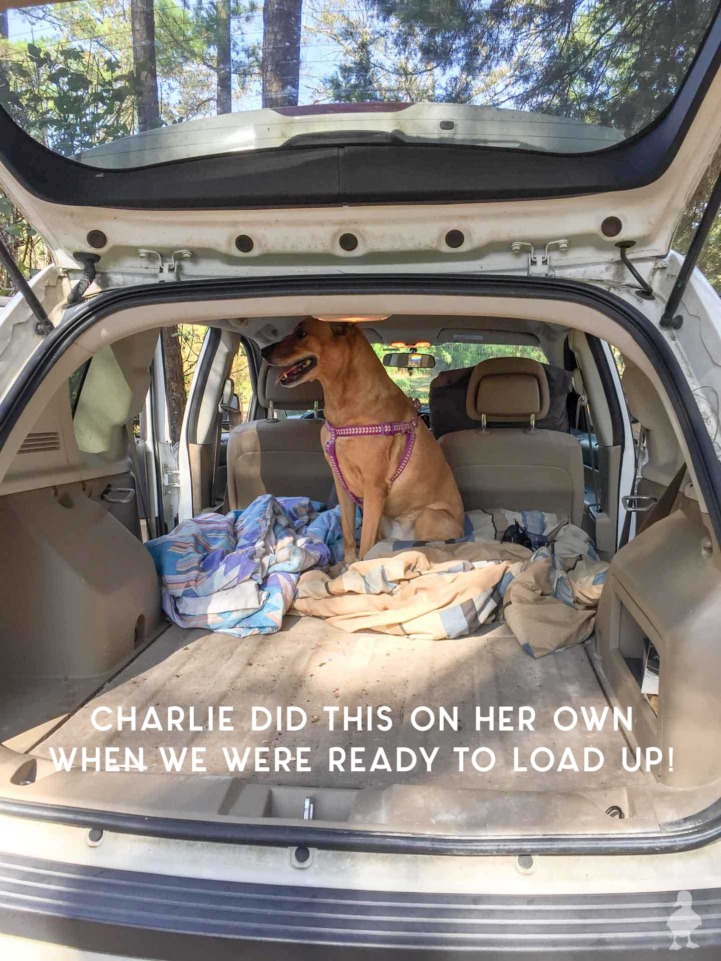 charlie-loading-up-in-the-car